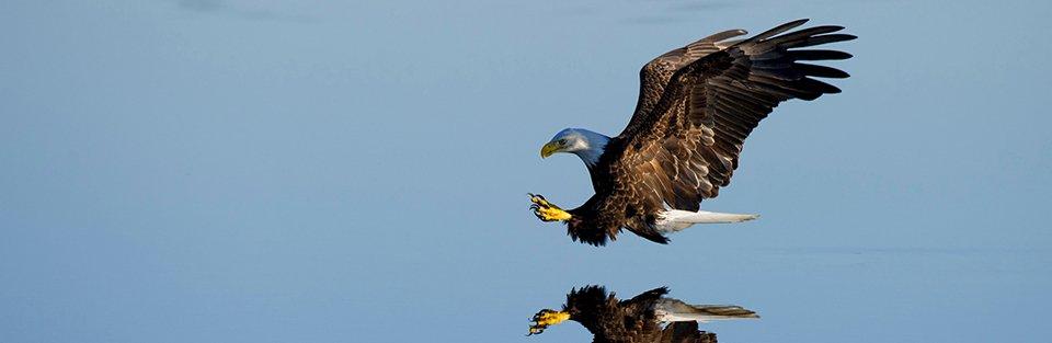 eagle-soaring-960.jpg
