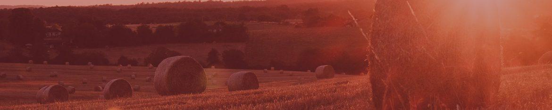 haybales-in-field.jpg